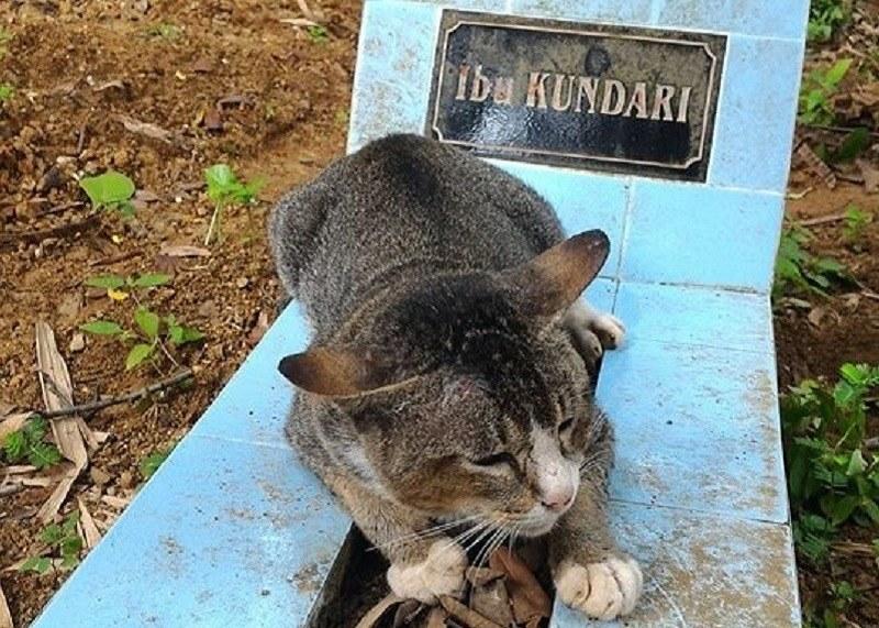Kotka, która pilnuje grobu swojej zmarłej właścicielki /mirror.co.uk /Internet