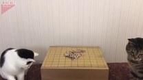 Koty grają w japońską planszówkę