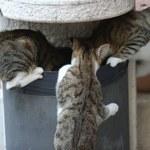 Koty nie prowadzą nas do szaleństwa