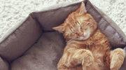 Koty podbijały świat dwa razy