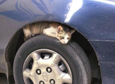 Koty wymyślają alternatywne sposoby korzystania z samochodów /AFP