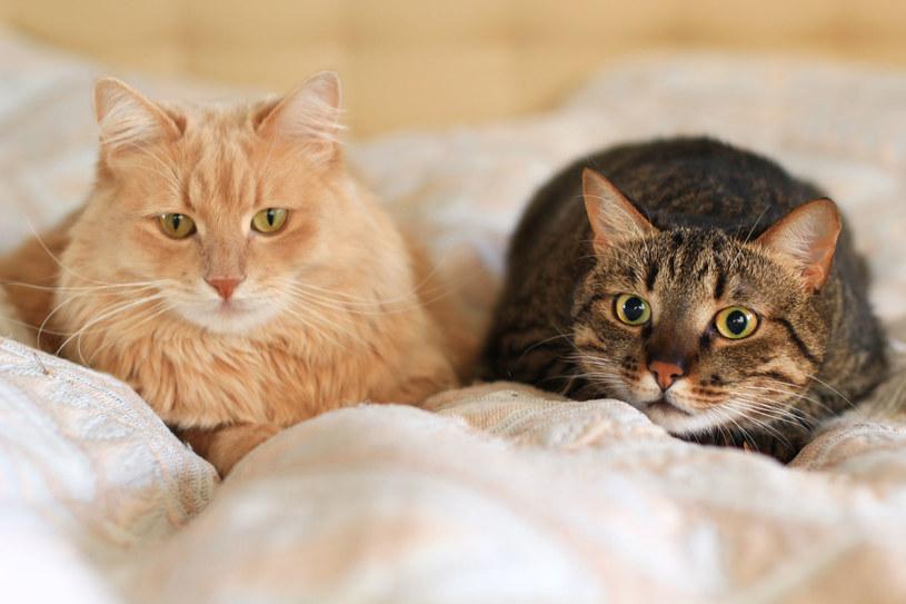 Koty zbierają zanieczyszczenia /123RF/PICSEL