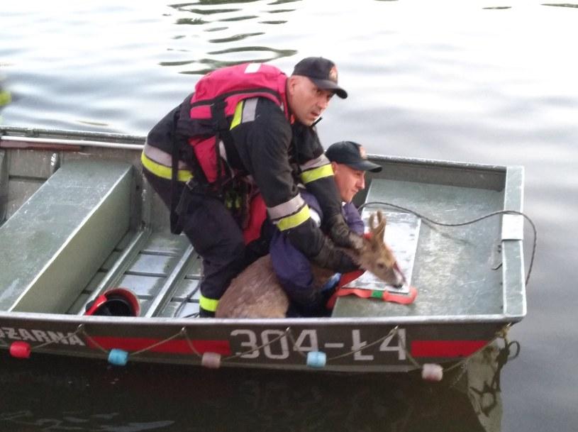 Krakowscy strażacy uratowali jelonka /Państwowa Straż Pożarna /facebook.com