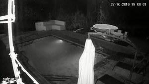 Krokodyl atakuje parę w basenie