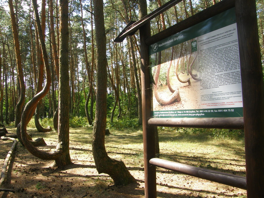 Krzywy Las w Gryfinie /Aneta Łuczkowska /RMF FM
