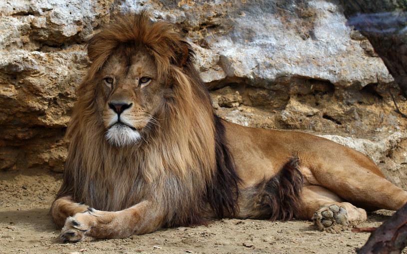 Kto chciałby zabić takie piękne zwierzę... /©123RF/PICSEL