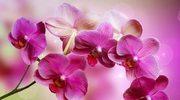 Kwiaty do twojego domu