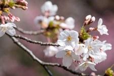 """""""Kwiaty w Pudełku"""", czyli opowieść o kobietach w japońskim społeczeństwie"""