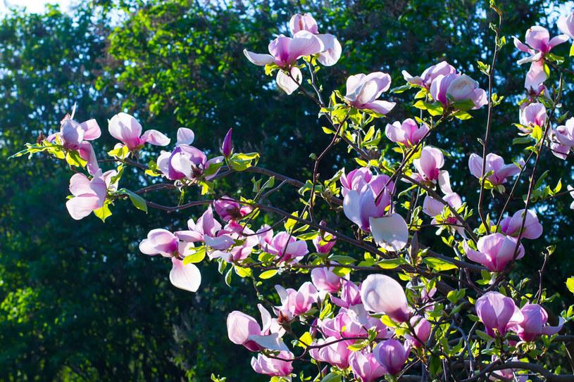 Kwiecień to czas na cięcie, nawożenie i rozmnażanie /©123RF/PICSEL