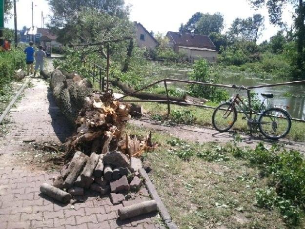 ...łamała drzewa... /INTERIA.PL