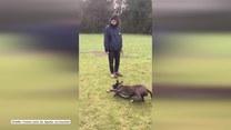 Łapanie piłki nie jest mocną stroną tego psa