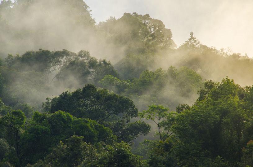Las tropikalny w wyniku dryfu kontynentów zawędrował do Norwegii /©123RF/PICSEL