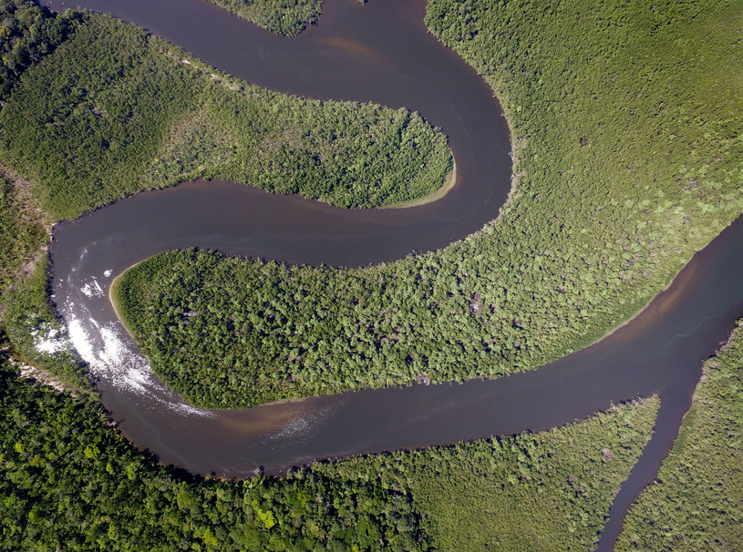 Lasy deszczowe Amazonii /123RF/PICSEL