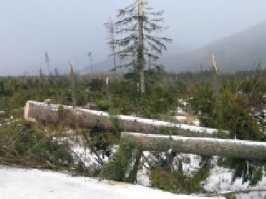 Lasy na Słowacji zostały mocno przetrzebione /RMF