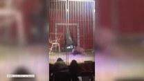 Lew zaatakował tresera podczas występów w cyrku we Francji