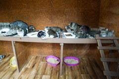 Łódź: 27 kotów czeka na nowy dom