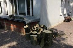 Łódź: Nawałnica wyrządziła szkody w ogrodzie zoologicznym