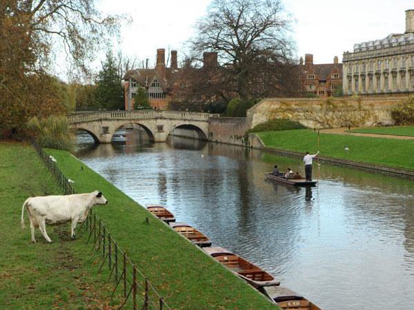 Łodzie o płaskim dnie na rzece Cam - to klasyczny sposób zwiedzania Cambridge  /The New York Times Syndicate