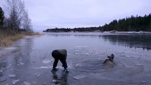 Łoś utknął w zamarzniętym jeziorze