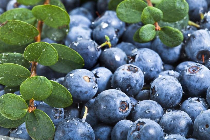 Lubisz jeść jagody prosto z krzaczka? Uważaj... /©123RF/PICSEL