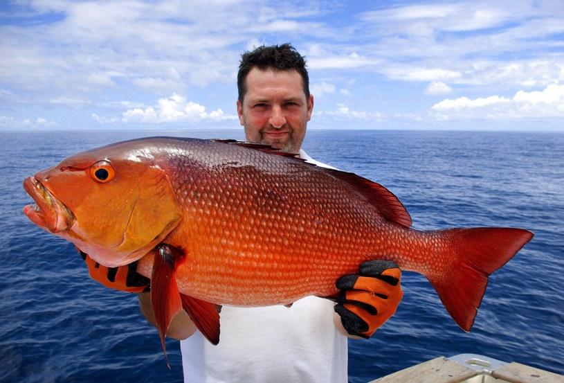 Lucjan czerwony jest niezwykle smaczną rybą, jednak po zamrożeniu jej mięso traci wszystkie zalety /©123RF/PICSEL