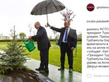 Łukaszenka podlewa jodłę. W deszczu