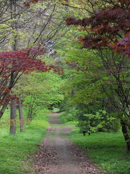Gdy nie mam szansy w majowy weekend wyjechać gdzieś dalej, staram się przynajmniej znaleźć czas na wizytę w Arboretum w Rogowie - pięknym miejscu na wiosenny spacer, który łączy aktywność na świeżym powietrzu, z pięknymi doznaniami estetycznymi. Szczególnie urokliwie jest tu właśnie późną wiosną, gdy pojawiają się pąki na różanecznikach, a magnolie są w pełnym rozkwicie.