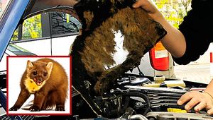 Małe zwierzę, duże szkody, czyli kuny i gryzonie w samochodzie
