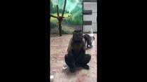 Małpa z ludzką twarzą! Internet oszalał