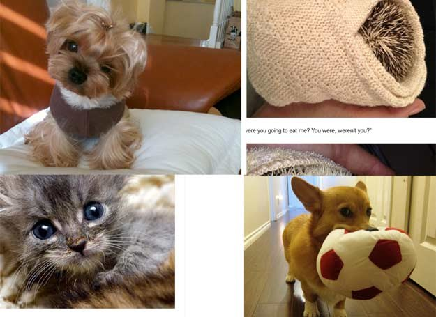 Maluchy opanowują internet fot. Cute Overload /INTERIA.PL