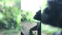 Mały chłopiec skradł serce szympansa