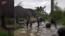 Mały słoń ma problemy z przejściem przez rzekę