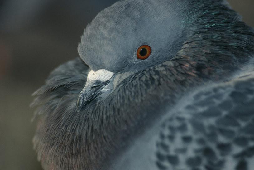 Mamy więcej wspólnego z ptakami niż nam się wydawało? /© Glowimages