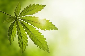Marihuana sposobem na bolesną menstruację