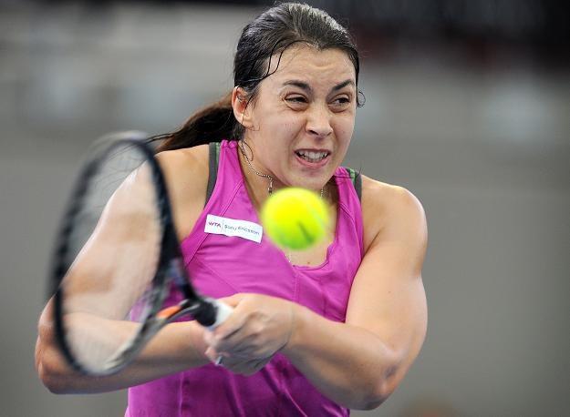 Marion Bartoli dobrze spisuje się w turnieju w Brisbane /AFP