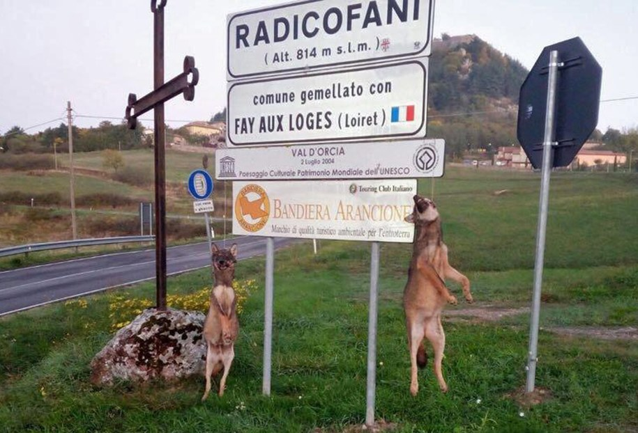 Martwe zwierzęta sprawca powiesił na znaku drogowym przed wjazdem do miasteczka Radicofani /STR /PAP/EPA