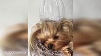 Masaż głowy w psim wydaniu