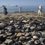 Masowe wymieranie gatunków oceanicznych coraz bliżej
