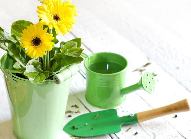 Masz ogród? Powinnaś pielęgnować go przez cały rok /©123RF/PICSEL