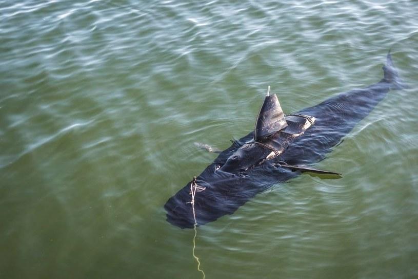 Maszyna o nazwie GhostSwimmer przypomina rekina. /YouTube