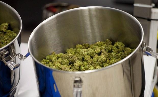 Medyczna marihuana będzie legalna w Polsce. Prezydent podpisał ustawę