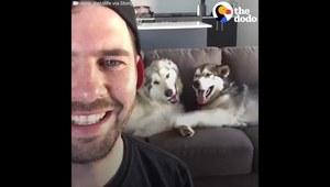 Mężczyzna nagrał swoje psy. Co one robią?