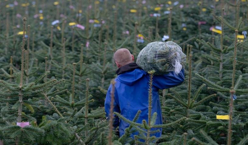 Mężczyźni podczas przygotowań świątecznych najczęściej angażują się w robienie zakupów /AFP