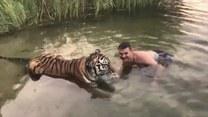 Mężczyźnie zebrało się na czułości z tygrysem. Czy uszedł z życiem?