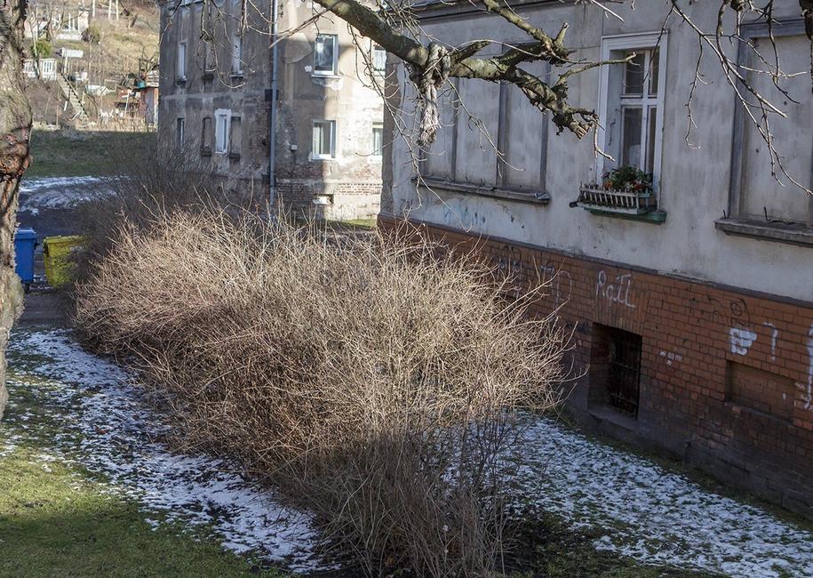 Miejsce, gdzie znaleziono martwego noworodka /Fot: Jacek Zych/Dziennik Wałbrzych /