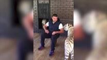 Mieszka z 10 tygrysami!