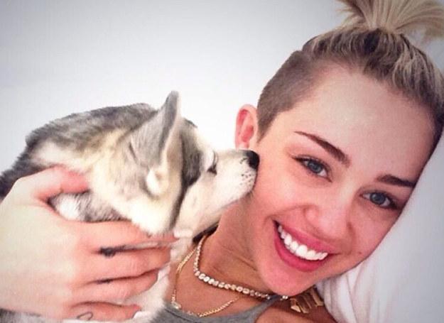 Miley Cyrus ze swoim psem Floydem /face to face/ REPORTER /East News
