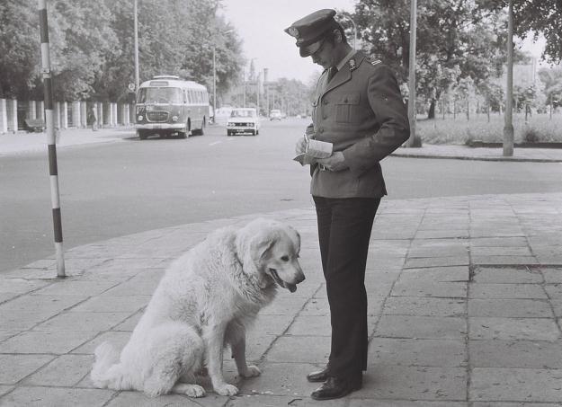 Milicjant wypisujacy mandat psu/fot. Zenon Zyburtowicz /East News