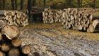 Mimo zapewnień Morawieckiego ws. Puszczy Białowieskiej, Polska wciąż może zapłacić karę