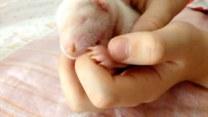 Młody skunks pokochał swoich opiekunów
